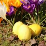 Eier färben mit Kurkuma (babyspeck)